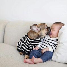 French Bulldog Puppy Kisses