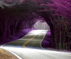 Purple Tunnel Road by stacey