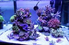 Getting beautifal corals begins with your light. Check out this LED setup that grows coral like crazy! Saltwater Aquarium Beginner, Saltwater Aquarium Setup, Aquarium Sump, Coral Reef Aquarium, Saltwater Fish Tanks, Aquarium Design, Marine Aquarium, Aquarium Ideas, Marine Fish Tanks