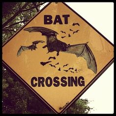 bat crossing  I would love this on the wall in the stairway!