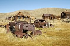 Abandoned cars merging with nature