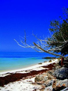Bahia Honda Florida Keys. Like a brother-in-law used to say: 'This is where they make the Honda'.;)