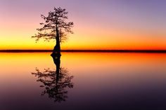 Last Light Lake Drummond - The end of evening civil twilight with reflections of a bald cypress on Lake Drummond in the Great Dismal Swamp. One of only two natural lakes in Virginia.