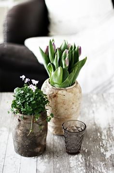 Bring Spring In: 27 Beautiful Greenery Touches For Your Home Indoor Garden, Garden Plants, Indoor Plants, Home And Garden, Potted Plants, Pot Pourri, Deco Nature, Deco Floral, My Flower