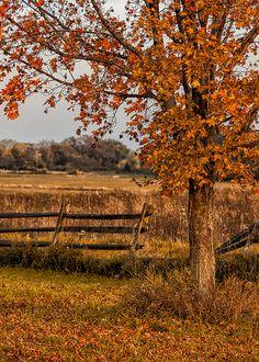 Autumn scene on the farm.
