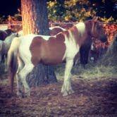 Pony(: