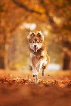 I can't wait to take my new dog running through the leaves.