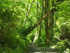 Trail through Discovery Park Seattle