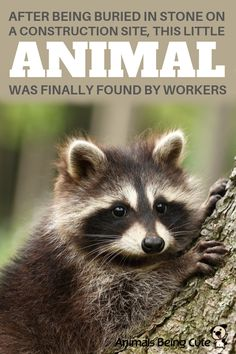 Little Animal Found By Workers After Being Buried In Stone On A Construction Site Inspirational Animal Quotes, Stone Statues, Interesting Animals, Animal Facts, Wildlife Conservation, Body Heat, Find Pets, Diy Stuffed Animals, Dog Owners