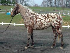 10 Rare And Beautiful Horses You've Never Seen Before