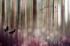 "Saatchi Art Artist Johanna Amnelin; Photography, ""Birds 1/10"" #art"