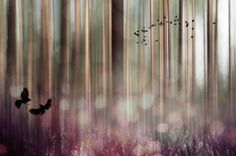 "Saatchi Art Artist Johanna Amnelin; Photography, ""Birds 1/10"" #art"