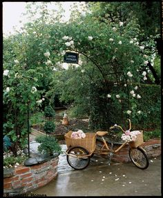 English roses. . . .  Love the wicker basket on back, gonna change my metal basket for a wicker one...