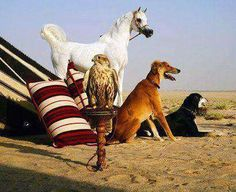 Traditional: Arabian Horse and tent, falcon, Salukis~the whole family, and the magical desert floor, sand.