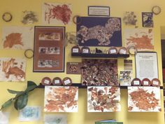 The story of brown in the toddler room at The sunflower school in Orangeville , Ontario Reggio Documentation, Steve Jenkins, Reggio Emilia Classroom, Infant Classroom, Creative Curriculum, Color Shapes, Learning Environments, Gallery Wall, Colours