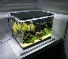 "415 Likes, 1 Comments - Aqua Bio (@aqua.bio) on Instagram: ""Nature Aquarium #natureaquarium #naturalovers #natural #natura #plantedtanks #plantedtank…"""