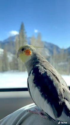 Funny Birds, Cute Birds, Pretty Birds, Beautiful Birds, Animals Beautiful, Cute Little Animals, Cute Funny Animals, Baby Animals Pictures, Animals And Pets