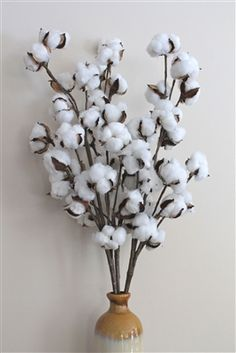 Natural Cotton Boll Stems