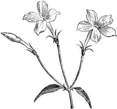 jasmine flower art - Google Search