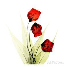 Sandersonia in Red Prints by Albert Koetsier