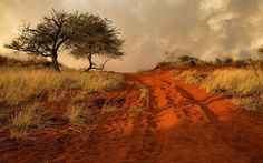 Scarica sfondi hill, albero, strada, africa