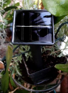 Solar Powered String Lights are a cost-effective, beautiful way to brighten your outdoor space. Powered by the sun, using them is easy. Led String Lights, Solar Power, Solar Panels, Bird Feeders, Outdoor Decor, Sun Panels, Solar Energy, Solar Power Panels, Teacup Bird Feeders