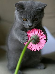 Love gray kitties...and pink flowers :)