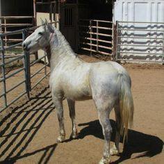 Horse Number: 2717, Image Name:2717.4.JPG