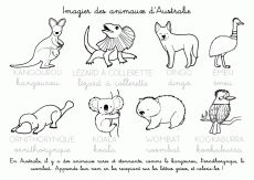 Coloriage à imprimer : Imagier des animaux dAustralie animals silly animals animal mashups animal printables majestic animals animals and pets funny hilarious animal