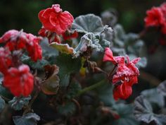 Make your plants last from one season to the next with these simple ideas from DIY Network.