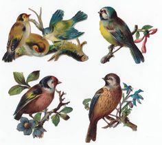 Victorian Scraps Birds Blue Flowers