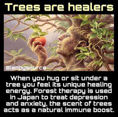 As crazy as this might sound I think this is true. I always, always feel very grounded & comforted while in the woods and/or sitting & yes, even hugging a tree💚❤❤💚💚💚 Mind Body Spirit, Mind Body Soul, Holistic Healing, Natural Healing, Holistic Remedies, Natural Remedies, General Knowledge Facts, Gk Knowledge, Spiritual Awakening