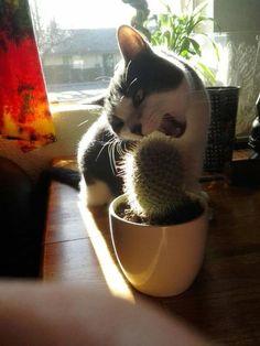 """mimi-the-cat: """"やめとけ〜(^◇^;)  いたたた~ """""""