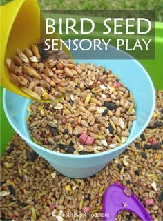 Simple to set up and fun to play outside - bird seed sensory bin for toddlers and preschoolers. Sensory Tubs, Sensory Activities Toddlers, Sensory Boxes, Spring Activities, Infant Activities, Sensory Play, Motor Activities, Sensory Diet, Bird Theme