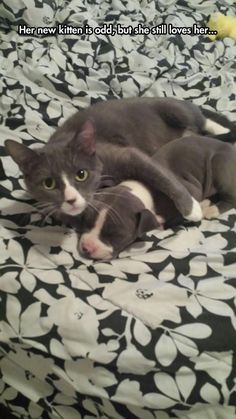 Funny Animal Pictures Of The Day – 20 Pics: Her new kitten is odd, but she still loves him. Cute Funny Animals, Funny Animal Pictures, Cute Cats, Funny Cats, Funny Humor, Animals And Pets, Baby Animals, Photo Chat, Tier Fotos