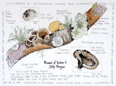 Lichens & jelly fungus #naturalist