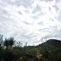 Plants and People of the Sonoran Desert Trail.