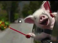 Piggy Sings Happy Birthday!!!