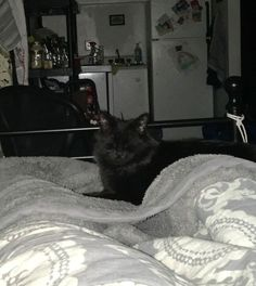 #Montreal cat rescue ~ Feb 23, 2017 ♥ AVAILABLE FOR ADOPTION is sweet young boy named SHADOW here ~ 7 months old male kittie rescued in Quebec. In foster now and available for adoption <3 If you would like to adopt Shadow please email  montrealcause4paws@gmail.com + Visit www.facebook.com/cause4paws for details and help spread the news!