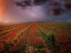 #vinoyfotografía #winelover #amantedelvino #Weinliebhaber #megustaelvino #wine #wein #vino #vin #vi #vinho #ardoar