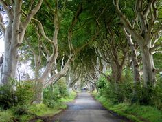 Road Tripping in Northern Ireland: The Places You Won't Want to Miss. The Dark Hedges in Northern Ireland. Scotland Vacation, Ireland Vacation, Ireland Travel, Ireland Uk, Northern Ireland, Dark Hedges Ireland, Switzerland Vacation, Backpacking Europe, Vacation Trips