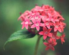 Nature Photography Coral Pink Flowers Green Wall Art by BreeMadden, $30.00