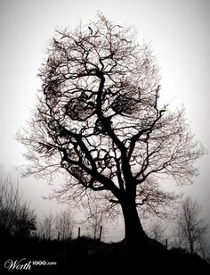 Take a look at this amazing Skull in Tree Scary Optical Illusion illusion. Browse and enjoy our huge collection of optical illusions and mind bending images and videos. Skull Tattoos, Cool Tattoos, Tattoo Ink, Sick Tattoo, Sleeve Tattoos, Scary Tattoos, Deer Tattoo, Raven Tattoo, Awesome Tattoos