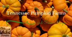 Tennessee Pumpkin Farms, corn mazes and more! A comprehensive list of Pumpkin…
