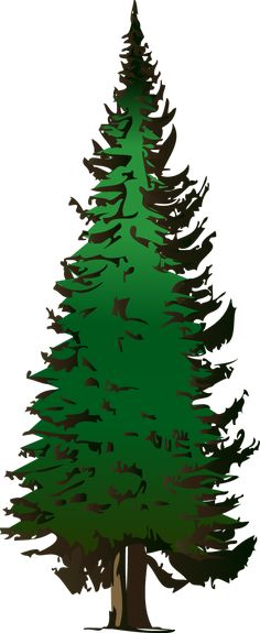 pine tree clip art pine cones illustration free stock clipart and rh pinterest com clip art pine tree silhouette clip art pine tree