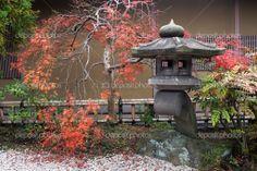 Japanese Lanterns | Japanese lantern and autumnal maple tree — Stock Photo © yurizap ...