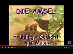 FG165 ☼ DIE AMSEL ☼ Amselnest auf dem Balkon ☼ Gedicht ☼ Vogelnest ☼ Nest  #DIEAMSEL #Amsel #Amselnest #Balkon #Vogelnest #Nest #Amseljunge #Amselküken  #KevinMacLeod #Gedicht #Gedichte #Lyrik #Poesie #Verse #Reime #Poem #Poetry #Lyric #Lyrics #Sprüche #Video #Videos #Video_Clip #Video_Clips #YouTube_Video #YouTubeVideo #YouTube_Videos #YouTubeVideos #VideoClip #GedichtVideo #Gedicht_Video #SmallYouTuber  #GedichtmitMusik
