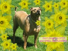Don't forget to stop, breath and smell the flowers! #dog #dogs #yellow #flower #flowers #daffodil #daffodils SEE more DOGS at www.DogsCircle.com