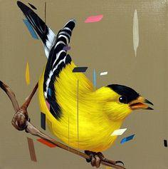 yellow finch - frank gonzales
