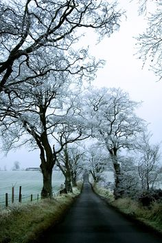 Deserted road near Dryburgh in the Scottish Borders after a hard frost on Christmas Day--photo by C Ray Dancer